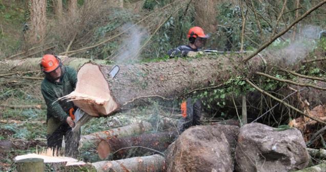 Hoy=undtor Woods Restoration