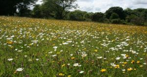 Haymeadows walk