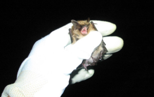 Scientist holding bat