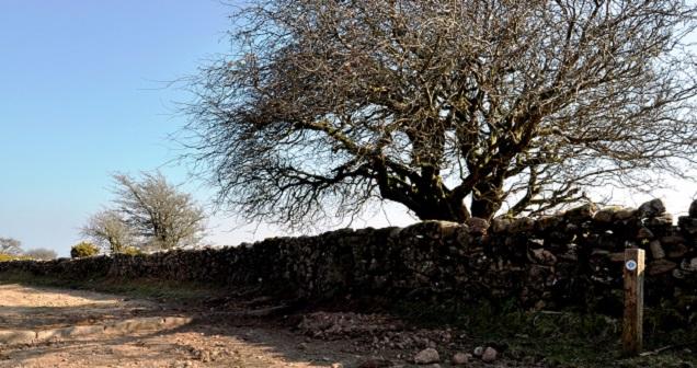 Bel Tor Driftway