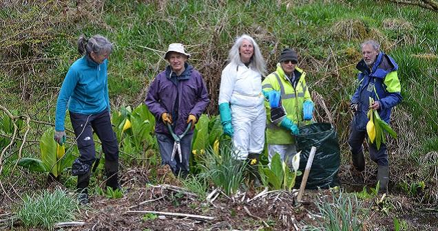 Invasive Volunteers